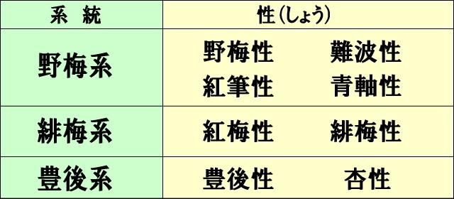 花梅の品種