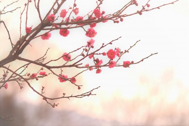 梅の冬の剪定