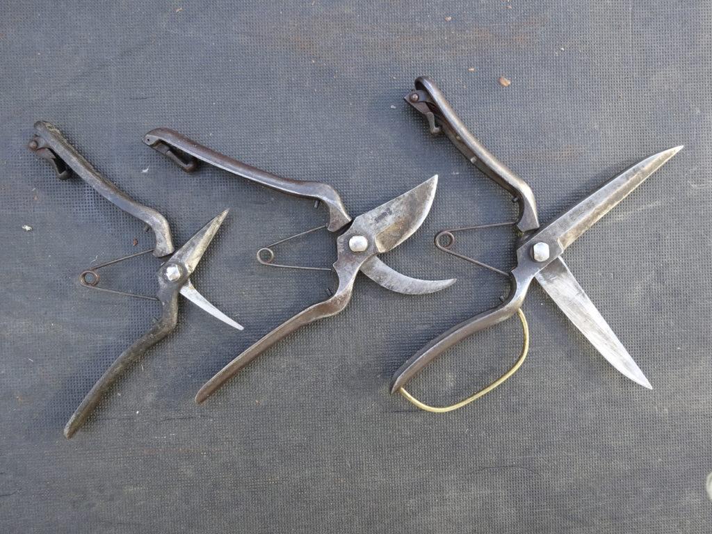 梅の剪定で使う剪定ばさみ
