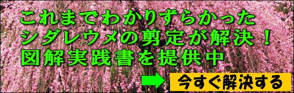 枝垂れ梅の剪定実践書