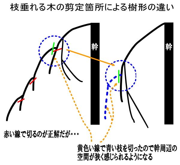 枝垂れる木の剪定方法による樹形の違い