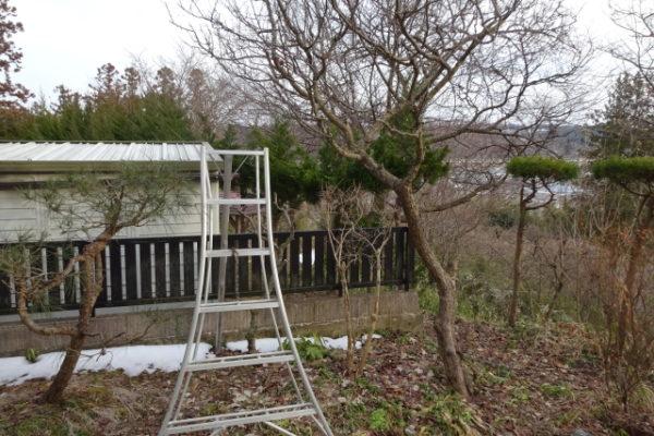 梅の剪定中の高所作業の危険性と対策