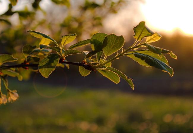梅の木の春と夏の時期に行なう剪定作業は何をする