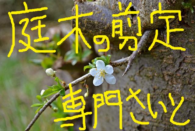 庭木の剪定専門サイト